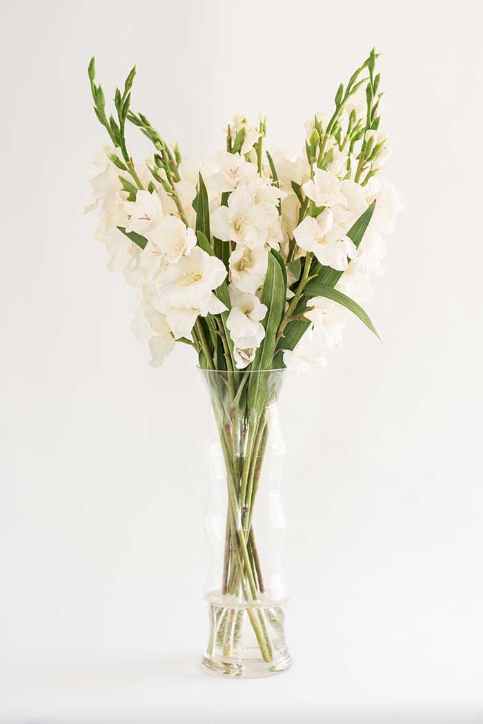 Bloomin Beautiful Flowers White Gladiolus In Tall Ribbed Glass Vase