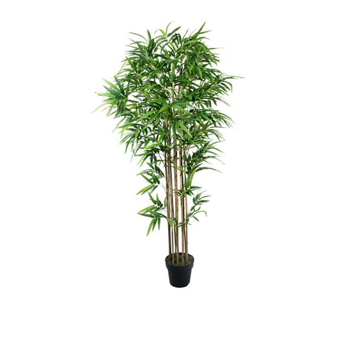 Bloomin Beautiful Flowers Bamboo Tree 1 8m Bloomin