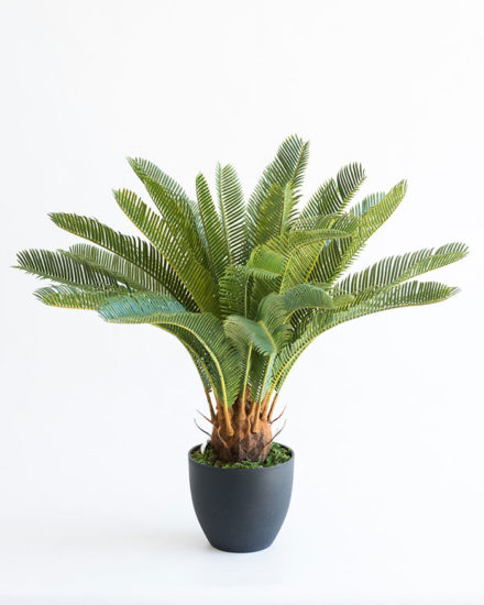 Realistic looking artificial fake tree used in offices, home and plantscaping for sale and bulk purchase online - cycas