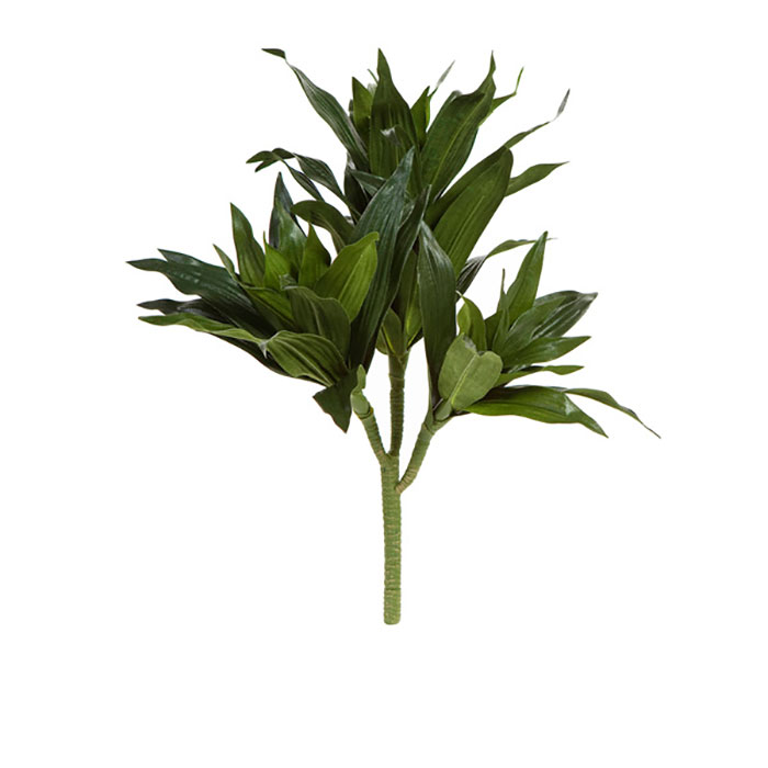 Bloomin 39 Beautiful Flowers Dracaena Stem 41cm Bloomin