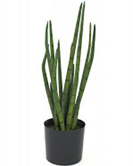 Realistic looking artificial succulent plant for sale and bulk purchase online - elephant toothpick