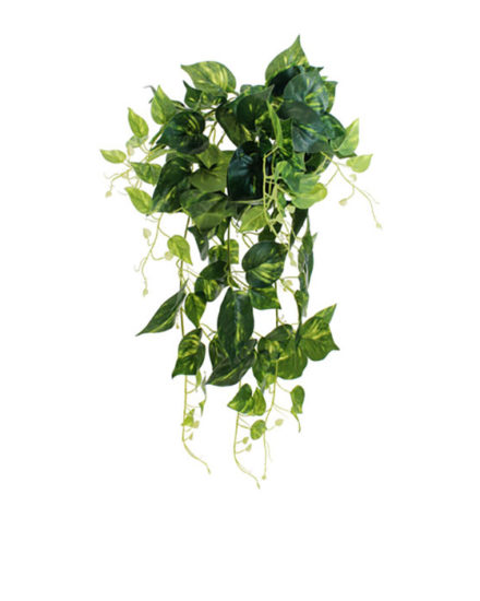 Realistic looking artificial hanging plant used in offices, home and plantscaping for sale and bulk purchase online - hanging pothos
