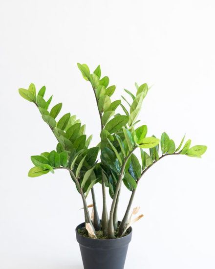 Realistic looking artificial fake tree used in offices, home and plantscaping for sale and bulk purchase online - ZAMIFOLIA