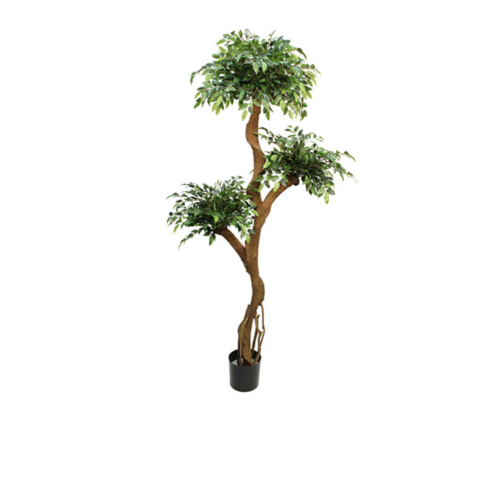Realistic looking artificial fake tree used in offices, home and plantscaping - crazy ficus