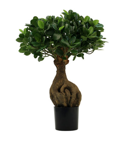 Realistic looking artificial fake tree used in offices, home and plantscaping for sale and bulk purchase online - bonsai ficus