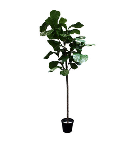 Realistic looking artificial fake tree used in offices, home and plantscaping for sale and bulk purchase online - fiddle leaf tree