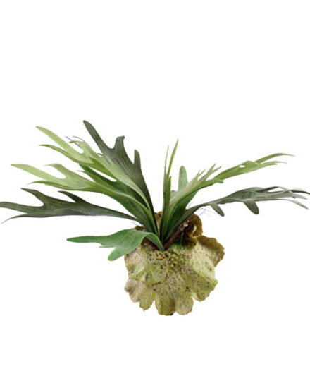 staghorn fake artificial silk house plant for use in office and plantscaping for sale and bulk purchase online.