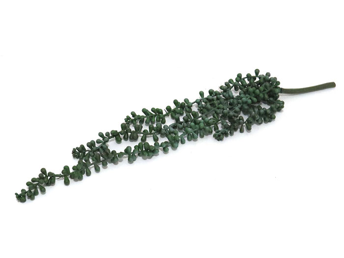 Bloomin Beautiful Flowers Succulent String Of Pearls 2 Bloomin