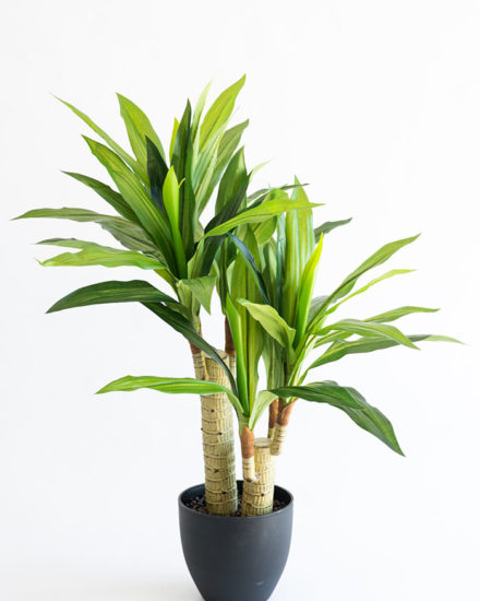 Realistic looking artificial fake tree used in offices, home and plantscaping for sale and bulk purchase online - DRACAENA